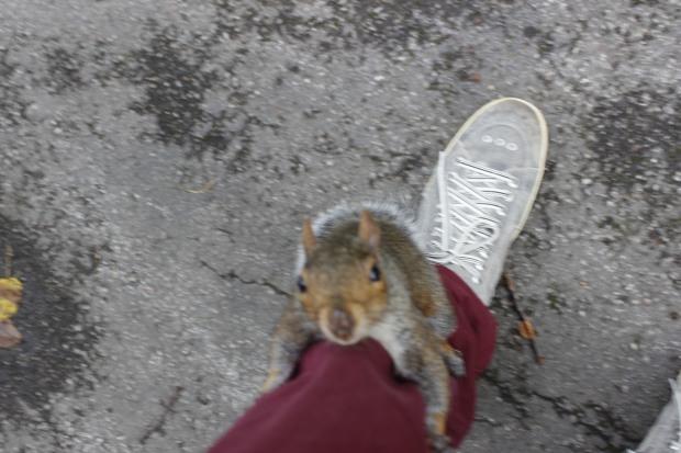 Digam olá para este simpático esquilo londrino :P