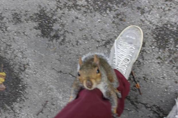 O pequeno Esquilo Londrino! Hi Squirrel!