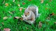 Esquilo - Regent's park - London